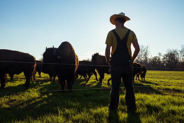 Waarom mensen vlees van de boer halen